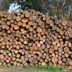 drewno opałowe, kłody dł 1,2 m
